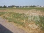 Immagine di Lotto 1_ terreno agricolo mq 6.428,00 via Bresenara, Villimpenta (MN).